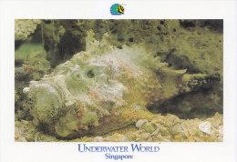 Postcard Fish Stonefish - Poissons Et Crustacés