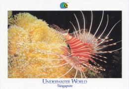 Postcard Fish Lionfish - Poissons Et Crustacés