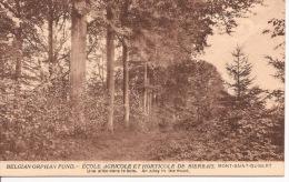 """Belgian Orphan Fund. Ecole Agricole Et Horticole De Bierbais. Mont-Saint-Guibert. """" Une Allée Dans Le Bois"""" - Mont-Saint-Guibert"""