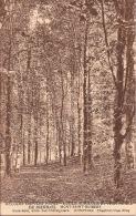 """Belgian Orphan Fund. Ecole Agricole Et Horticole De Bierbais. Mont-Saint-Guibert.  Sous-Bois, Allée Des Châtaigniers"""" - Mont-Saint-Guibert"""
