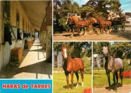: Réf : J-12- 6895 :  Tarbes Le Haras-national - Tarbes