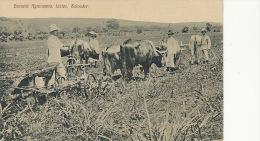 Izalco, Escuela Agronomia Labour Attelage Boeufs Charrue - Salvador