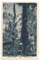 GABON - Collecte De L'huile De Palme - Paysages D'Afrique - Gabon