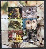 DJIBOUTI - KB V. 2012, Katzen (tie1400) - Domestic Cats