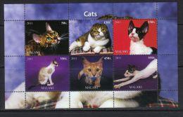 MALAWI - KB V. 2011, Katzen (tie1420) - Domestic Cats