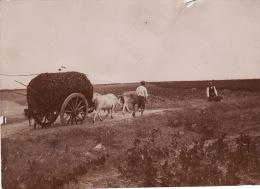 Photo Originale 1896 SAINT-GILDAS-DE-RHUYS (près Sarzeau) - Un Attelage Sur Un Chemin (A32) - Unclassified
