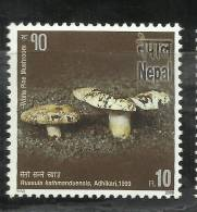 NEPAL,2006, Bio Diversity, Mushrooms, White Pine Mushrooms ,MNH ,(**) - Pilze