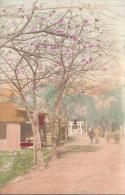 7834 - Cerisiers En Fleurs - Japon