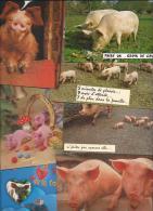 7 CPM - COCHONS - Toutes Différentes - Cochons