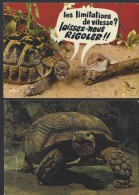 2 CPM - TORTUE - Animaux & Faune