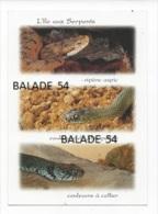 CPM - L'ile Aux SERPENTS : Vipère Aspic / Couleuvre De Montpellier / Couleuvre à Collier - Tierwelt & Fauna