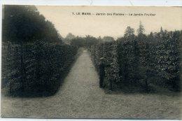 72 - LE MANS - Jardin Des Plantes - Le Jardin Fruitier - Le Mans