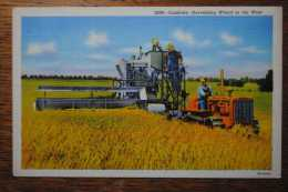Combine Harvesting Wheat In The West Moissonneuse Batteuse - Tracteurs