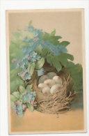 Bouquet De Myosotis. Nid Et Oeufs - Fleurs, Plantes & Arbres