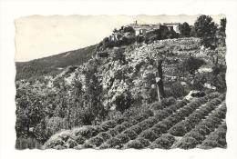Cp, 06, Gourdon, Culture De La Lavande, Voyagée 1957 - Frankrijk