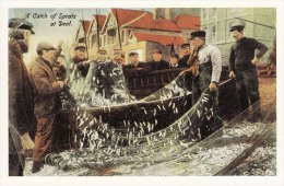 Postcard A Catch Of Sprats At DEAL Fish Fishermen Nets Fishing Boat Repro - Fishing