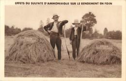 EFFETS DU SULFATE D AMMONIAQUE SUR LE RENDEMENT EN FOIN ( PUB - PUBLICITE ) - Agriculture
