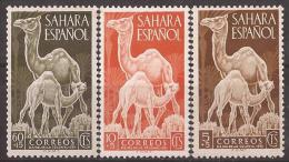 SA91-LB108TANO.Spain Espagne SAHARA ESPAÑOL Dia Del Sello.DROMEDARIOS,CAMELLO S.  1951. (Ed 91/3**)sin Charnela . - Otros