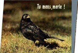 (250M) Bird - Oiseaux - Tu Mens Merle - Oiseaux