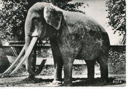 Sainte Genevieve Des Bois : Hameau De Liers - éléphant En Béton (éléphas Indicus) Tabac De L´Elephant Route De Corbeil - Sainte Genevieve Des Bois
