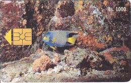 Venezuela, CAN2-0013, Marine Fauna, Pez Azul Rey, Fish, 2 Scans. - Venezuela