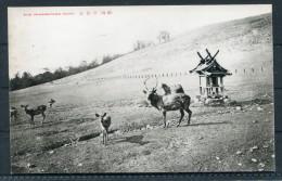 Japan Mikasayama Nara Deer - Japan
