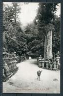Japan Kasuga Shrine Nara Deer - Japan