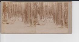 PH 08-13-240 :  Format 6 X 13 Cm : Bagnoles De L´Orne  Forêt De Sapins  (Orne) Août 1904 - Photos Stéréoscopiques
