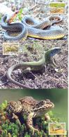 2013, Natural Reserves, Jagorlyk, Reptilies & Amphibies, 5 Maxicards, Mint/** - Turtles