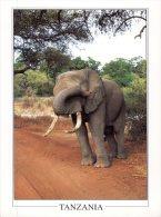(678) Elephant - Eléphant - Elephants