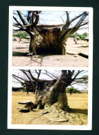 TOGO - Baobab De Bitchienga - Tone Postcard Used To The UK As Scans - Togo