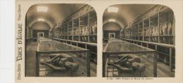 Pompei, Musee, Cadavre - Stereoscopi