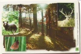 Central Balkan - Secrets Of Old-growth Forest - Bulgarije