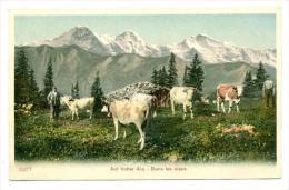 Cows, Dans Les Alpes, Auf Hoher Alp, Austria, 1900-1910s - Austria