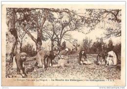LA RECOLTE DES CHATAIGNES. EN DORDOGNE. REF 11575 - Frankreich