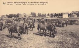 """Institut Sérothérapique De Gembloux.  Un Des """"Paddock"""" Avec Une Partie De La Cavalerie. - Gembloux"""
