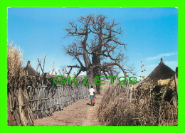 ETHIOPIE - BAOBAB CHARACTERISTIC TREE - ANIMÉE UN GARÇON - - Ethiopie