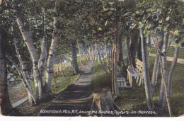 Among The Birches, Taylor's-on-Schroon, Adirondack Mountains, New York, PU-1909 - Adirondack