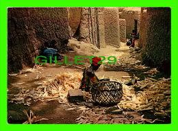 AFRIQUE - EFFEUILLAGE DU MAIS - PHOTO ALAIN DENIS - - Cartes Postales