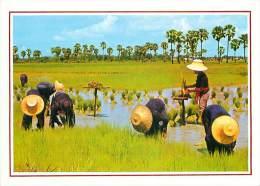 CPM - Cultivation Of The Rice In Thaïland (Phornthip Phatana Ltd, B 318) - Thaïlande