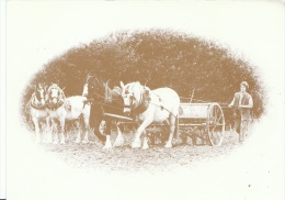 Agriculture Postcard - Seed Drilling With Four Horses   AA724 - Farms