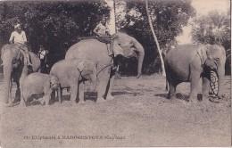 CEYLAN - ELEPHANTS A KADOGUSTOTA. - Sri Lanka (Ceylon)