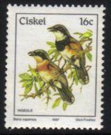 Ciskei - 1981 Birds 16c Flycatcher (**) # SG 15a , Mi 114 - Ciskei