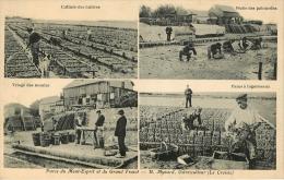 Le Croisic : Ostreiculture Mynard - Le Croisic