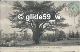 MONTIGNY-LENCOUP - Cèdre Planté Par Bernard De Jussieu En 1734 - N° 229 - France