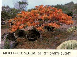 (888M) France- St Barthelemy Island - Antilles