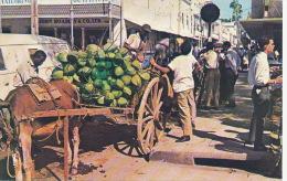 Tiinidad Coconut Vendor Downtown Port Of Spain  Edit Thomas Donkey Ane - Trinidad