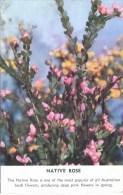 AUSTRALIAN FLORA - NATIVE ROSE - Flowers, Plants & Trees