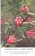 AUSTRALIAN FLORA - MOUNTAIN DEVIL OR HONEY FLOWER - Flowers, Plants & Trees
