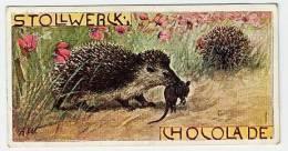 Stollwerck - Règne Animal – 27.5 (FR) – Hérisson, Hedgehog, Egel, Erinaceus - Stollwerck